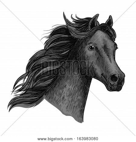 Black raven horse with proud look and holding head up high. Vector portrait of mustang equine head. Purebred powerful noble stallion with thick curly waving mane