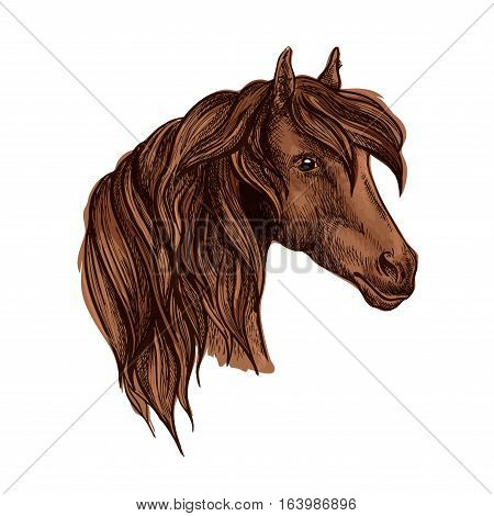 Vector portrait of noble brown horse mare with wavy mane and shiny kind eyes. Chestnut breed mustang stallion symbol for sport horse racing emblem