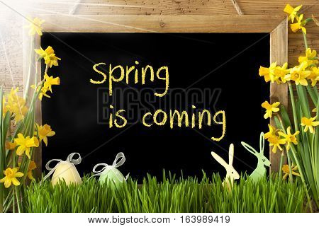 Blackboard With English Text Spring Is Coming. Sunny Spring Flowers Nacissus Or Daffodil With Grass, Easter Egg And Bunny. Rustic Aged Wooden Background.