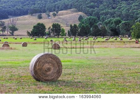 Round Hay Bales In A Field After Harvest