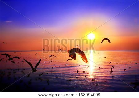 silhouette of nature river and bird flying on sun set