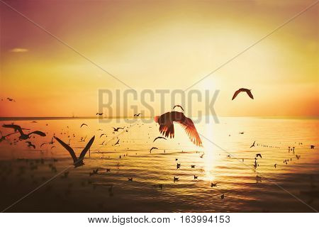 silhouette of nature river or sea and bird flying on sun set