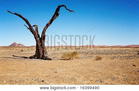 Dead tree in Namib Desert- Sossusvlei, Namibia.