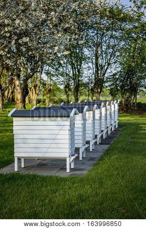 The old white beehives. Shot in Denmark