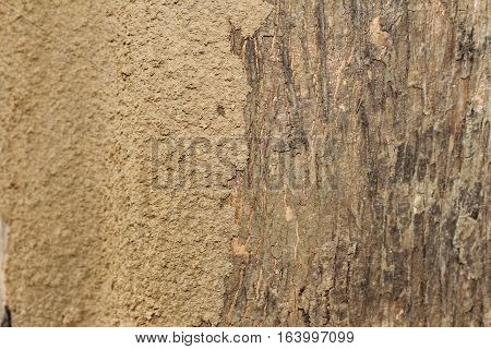 Wood Termites To Invade The Building.