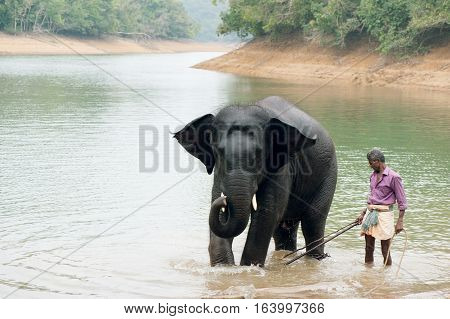 Bathing time for elephant in a lake with gadman at Kottoor Kappukadu Elephant Rehabilitation Centre, 24 October 2016, Kerala India