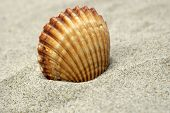 Beautiful Shell on the white beach sand. poster
