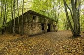 Wolf's Lair Adolf Hitler's Bunker in Poland. First Eastern Front military headquarters in World War II. Complex was blown up and abandoned on 1945. Autumn chaparral grown ruins trees leaves. poster