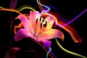 Flower a lily & night neon lights poster