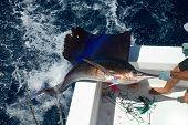 Sail Fish Coming Out Puerto Vallarta Mexico poster