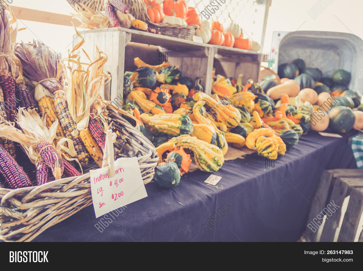 Decorative Corn Gourds Image Photo Free Trial Bigstock
