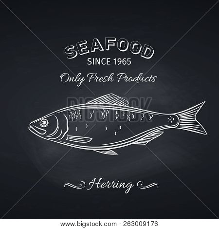 Hand Drawn Herring Fish On Chalkboard. Seafood Icon Menu Restaurant Design. Engraving Style. Vector