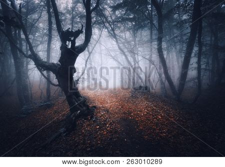 Dark Fog Forest. Mystical Autumn Forest With Trail In Yellow Fog