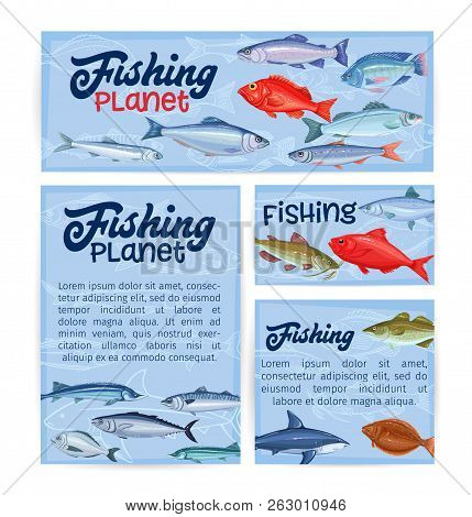 Fish Banners. Seafood , Cartoon Salmon, Anchovy, Codfish, Sea Bass, Ocean Perch And Sardine. Icon Ma