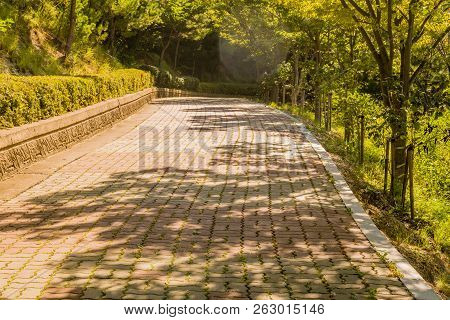 Wide Brick Tree Lined Walkway With Concrete Brick Wall Lined With Trimmed Hedges In A Mountain Park.