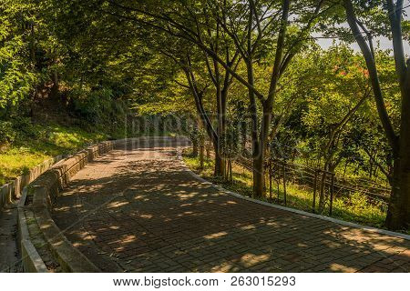 Shaded Brick Tree Lined Walkway With Concrete Brick Wall In A Mountain Park On Summer Day.