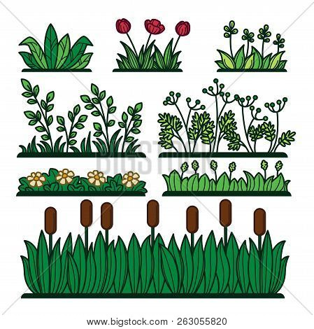 Greenery Green Grass Flower Plants And Decorative Verdure.