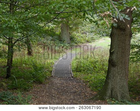 A Wooden Walkway Through The Trees, Brown Leaves Scattery The Ground Leading To The Path