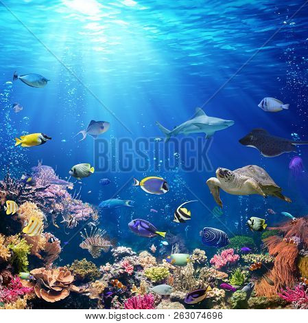 Underwater Scene With Coral Reef And Tropical Fish, 3d Illustration