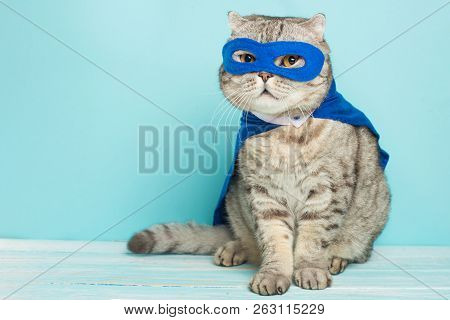 Superhero Cat, Scottish Whiskas With A Blue Cloak And Mask. The Concept Of A Superhero, Super Cat, L