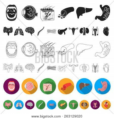 Internal Organs Of A Human Flat Icons In Set Collection For Design. Anatomy And Medicine Vector Symb