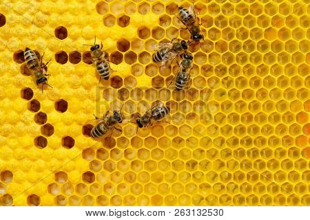 Bees on a cell with larvae. Bees Broods. poster