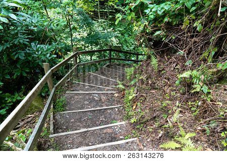 Staircase Leading Down A Walkway Through The Forest.