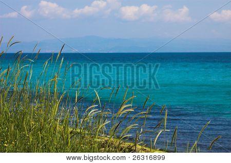 Some grass near the sea, Greece
