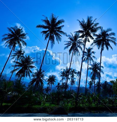 Palm forest silhouettes on blue sky