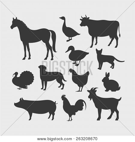Farm Animals Silhouettes. Horse, Cow, Pig, Goat, Rabbit, Cat, Dog, Goose, Chicken, Duck, Rooster, Tu