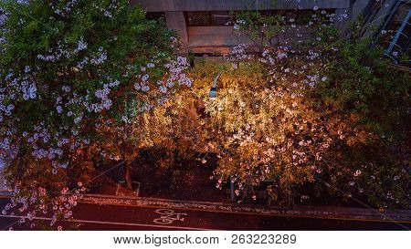 Brightly Lit Trees On A Walkway Beside A Street In The City