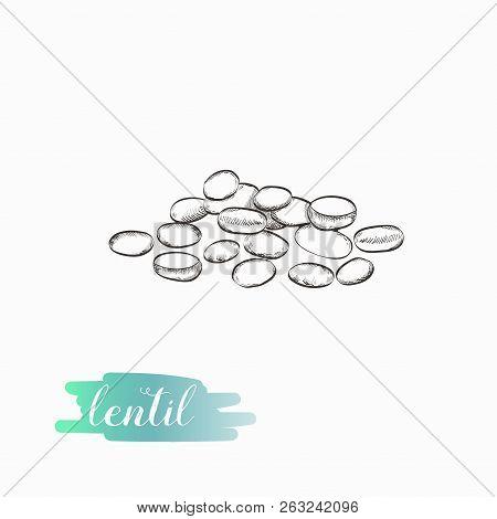 Lentil Hand Drawn Illustration Isolated On White Background. Lentil Grains Vector Illustration.
