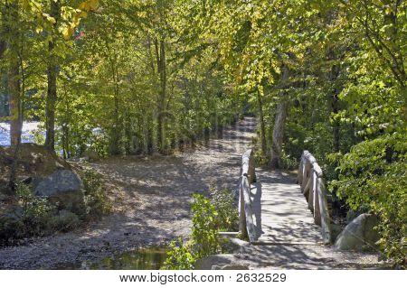 Bridge Between Ponds