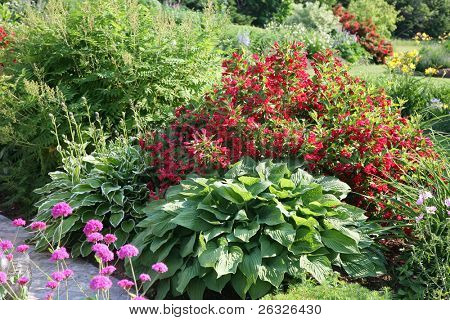 Cold hardy plants, weigelia and hostas in a northern flower garden.