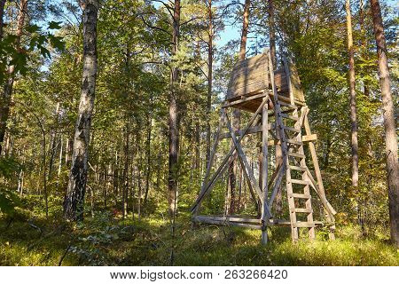 Wooden Elevated Deer Hunting Blind Hidden In A Forest.