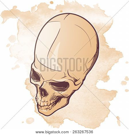 Human Skull Hand Drawing. Three Quarters Angle. Linear Drawing Painted In 3 Shades, Isolated On Whit