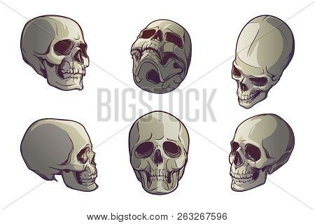 Set Of 5 Human Skulls In Various View Angles. Linear Drawing Painted In 3 Shades, Isolated On White