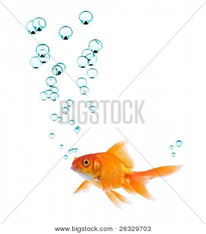 High resolution image of goldfish with bubbles.