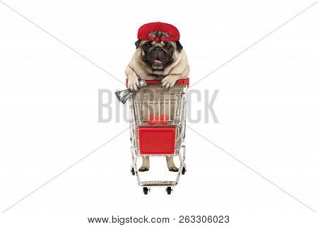 Funny Happy Pug Puppy Dog With Money In Is Hand, Leaning On Shopping Cart. Isolated On White Backgro
