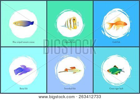 Gold Fish And Blue Striped Tamarin Wrasse Posters Set With Headlines. Butterfly And Green Tiger Barb