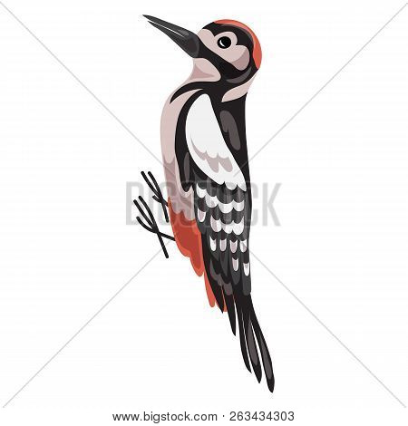 Woodpecker Icon. Cartoon Of Woodpecker Vector Icon For Web Design Isolated On White Background