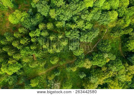 Aerial over deciduous woodland footpath trail