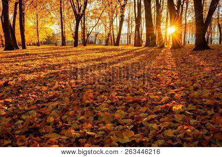 Autumn trees in sunny autumn park lit by sunshine - sunny autumn landscape in bright sunlight. Autumn park sunset scene. Fallen autumn leaves in the autumn park