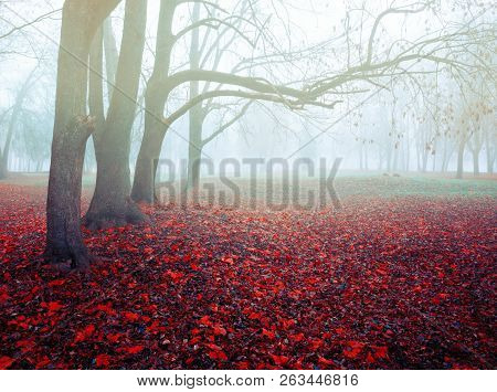 Autumn picturesque November foggy landscape. Deserted autumn park with bare autumn trees and dry fallen red autumn leaves, autumn nature scene