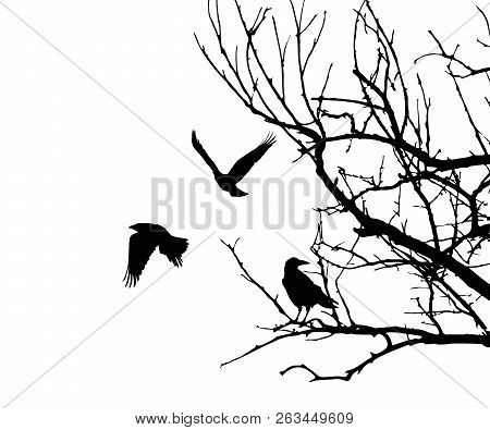 Realistic Illustration With Silhouettes Of Three Birds - Crows Or Ravens Sitting On Tree Branch With