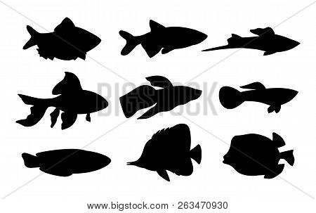 Aquarium Set Of Fish Silhouettes. Butterfly Boxfish Goldfish And Tamarin Blue Wrasse. Limbless Cold-