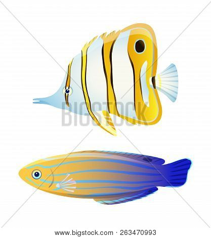 Butterfly Fish And Blue Striped Tamarin Wrasse. Fresh And Saltwater Aquarium Pets Silhouette On Blan
