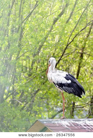 stork on roof poster