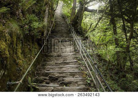 Steps Through Woodland At Devils Bridge, Wales,uk