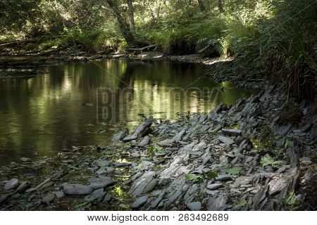 Nature, A Landscape Image Of A Woodland Pond With Reflections